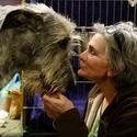 133-ая ежегодная выставка собак Westminster Kennel Club