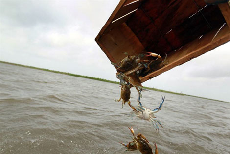 Катастрофа в Мексиканском заливе
