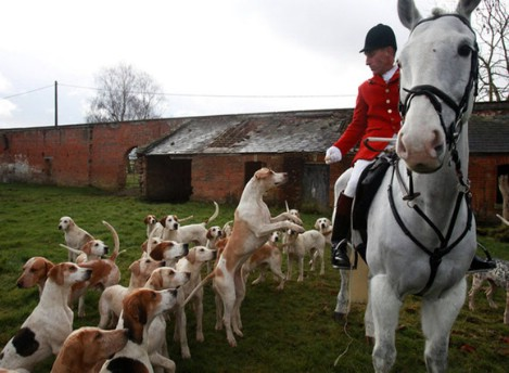 Охотничий клуб в Англии.  Охота на лис