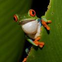 Животные от фотографа Sean Crane
