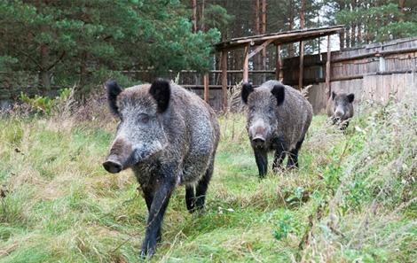 Будни охотхозяйства в Логойске