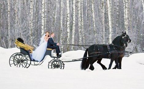 аренда экипажа, свадебная фотосессия с лошадьми, фотосессия с лошадьми, фото с лошадьми, фото с фризами, фризы фото