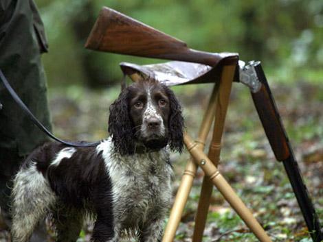 Во Франции собака отстрелила руку своему хозяину