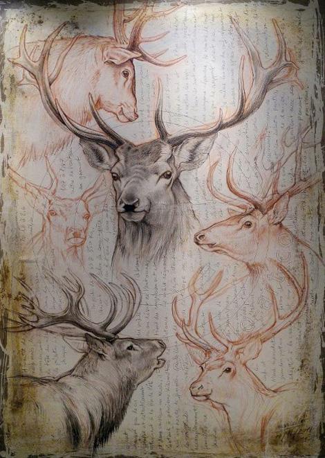 Дикие животные - рисунки Marcello Pettineo