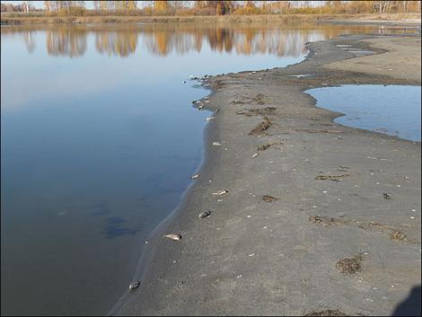 Горько-соленые озера Алтая