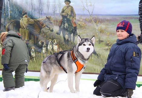 ездовые собаки в Национальном конном парке
