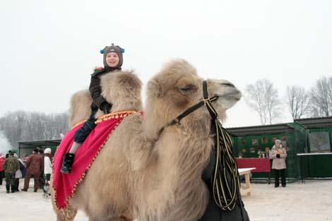 Покататься на верблюде в Подмосковье