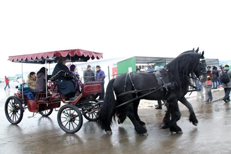 покататься в конном экипаже в Подмосковье в Национальном конном парке «Русь»