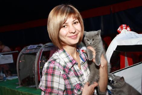 Каждый, кто неравнодушен к кошкам, смог погладить и подержать их в руках на прошедшей кошачьей выставке