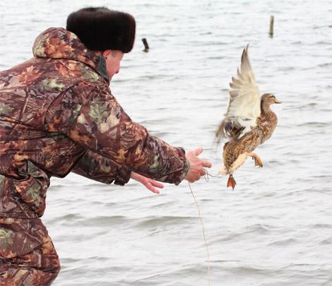 тульские открытые испытания охотничьих подсадных уток