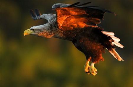 Хищные птицы Кьяртана Страна (Норвегия)