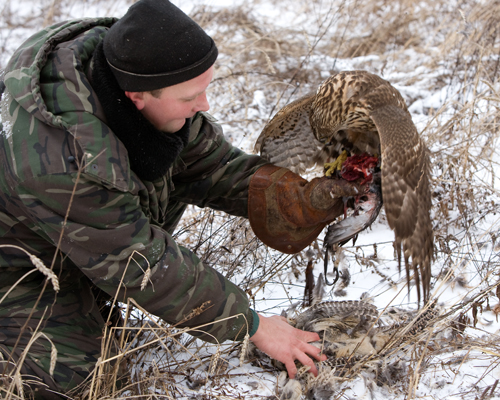 соколиная охота, царская охота, охота с ловчей птицей