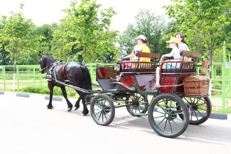 В передвижении по обширной территории Парка очень помогали конные экипажи