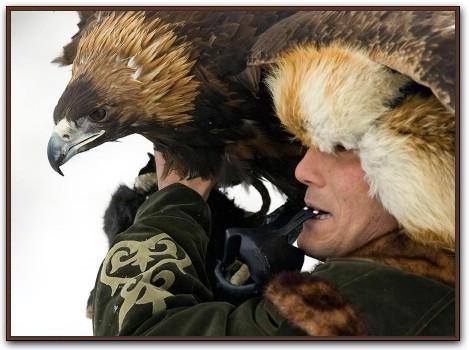 ловчие птицы, охота с ловчими птицами, ястреб, сокол