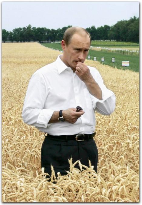 Путин на поле, путин и созревшее зерно