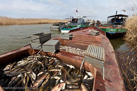 промысловая рыбалка на волге