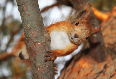 Фотоохота -2011 - фотоконкурс на призы Национального Фонда Святого Трифона и интернет-магазина Охотничий Стиль