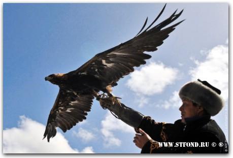 Беркутчи, тайганчи, салабурун, охота с соколом, охота с орлом, охота с ловчими птицами, охота с гончими, охота на волков