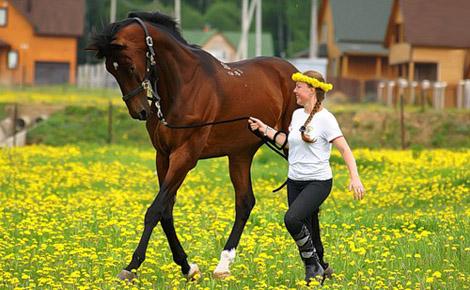 Обучение верховой езде в Подмосковье, прокат лошадей в Подмосковье
