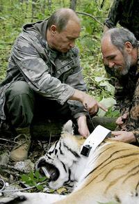 Путин в уссурийской тайге