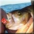рыболовные туры, рыбалка