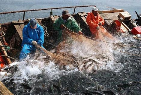 вылов лосося