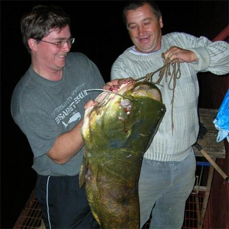 Сом, пойманый на базе Гусиный Остров, Волга, Астрахань, 626-22-06