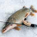 щука, календарь рыболова