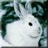 Охота на зайца, лису в Тверской области