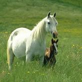 К 1 сентября - Детям о лошадях: Библиотечный урок для 5–6-х классов по теме «Лошадиные истории»