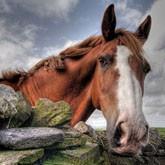 К 1 сентября - Детям о лошадях:  Методика урока по рассказу Б.Васильева «Великолепная шестерка»