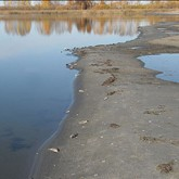 Горько-соленые озера Алтая погибают