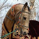Полцарства за коня! Во все века боевой конь ценился выше сокровищ