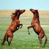 Остров диких лошадей