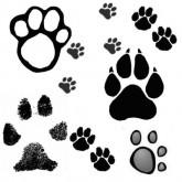 Следы ног животных на почве и на снегу