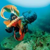 Владимир Гудзев - Мастер подводной фотосъемки