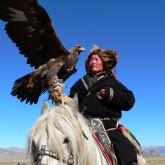 Кыргызские Тайганы и Монгольские Беркутчи