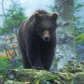 А. Формозов: По лисьим и волчьим нарыскам. По следам волка, медведя и других крупных хищников