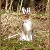 Охота на зайца. Все аспекты любимой охоты