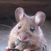 А. Формозов: По следам всякой мелкоты или ксерокопии мышек