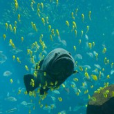 Blue water Hunting - Охота в толще воды
