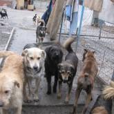 Бродячие собаки: Стрелять, Нельзя помиловать