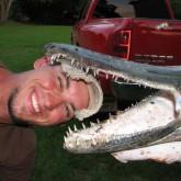 Панцирная щука, или Рыба-Аллигатор (ВИДЕО). Экстремальная рыбалка