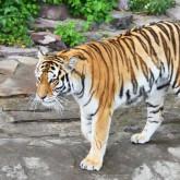 Зоопарки - убийцы, или как не нужно охранять природу
