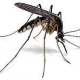 Вымирание видов приведет к эпидемиям