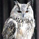 Некоторые биологические особенности  пернатых хищников (линька, половой диморфизм и половозрелость)