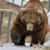 О медведях и безопасности. Советы профессионала