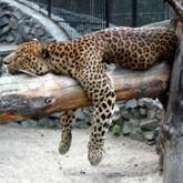Частные зоопарки и зверинцы: радости и проблемы
