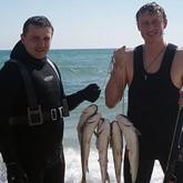 Средиземноморский губач в Черном море
