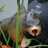 Подводная охота: уважая рыбу